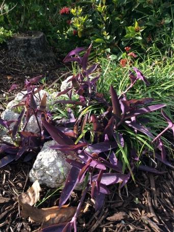 Palma Sol Botanical garden, Bradenton, Florida