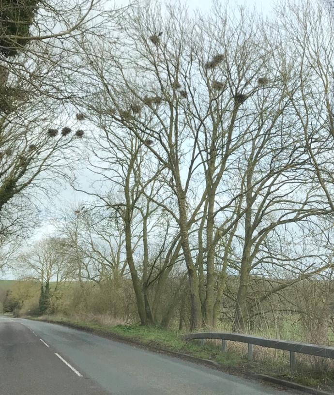 England bird nests